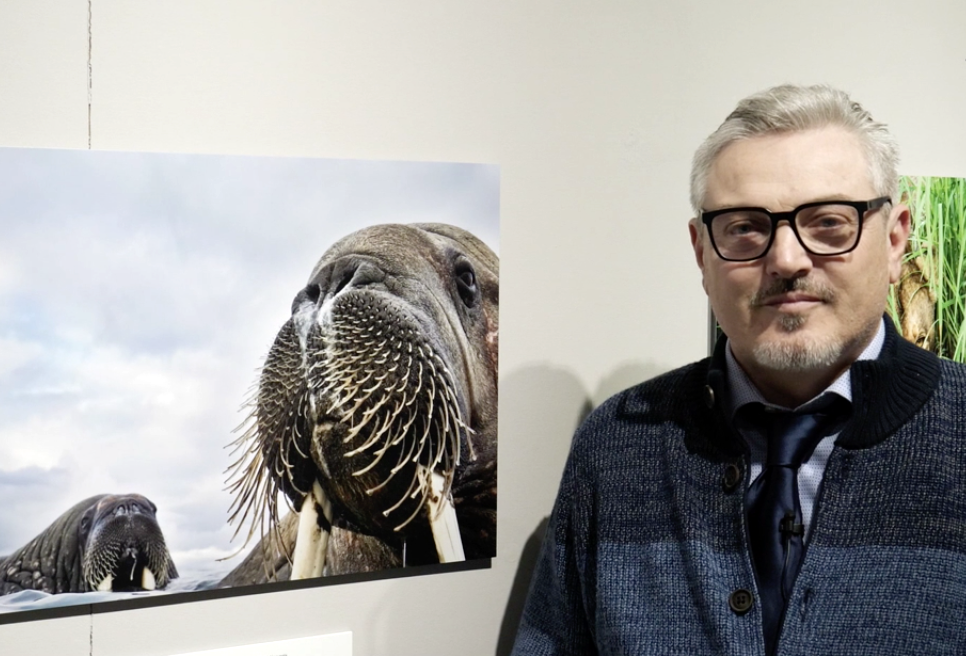 Wildlife Photographer of the Year 2019: intervista a Valter Bernardeschi